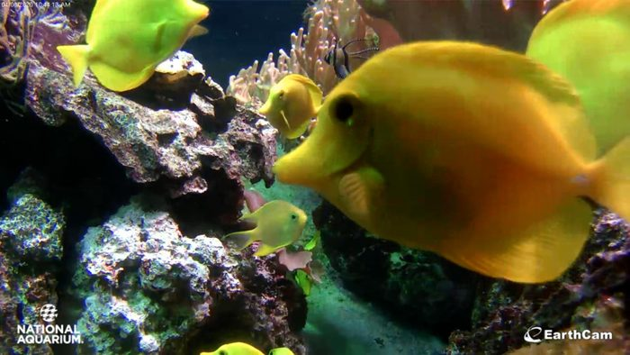 national aquarium, baltimore webcam