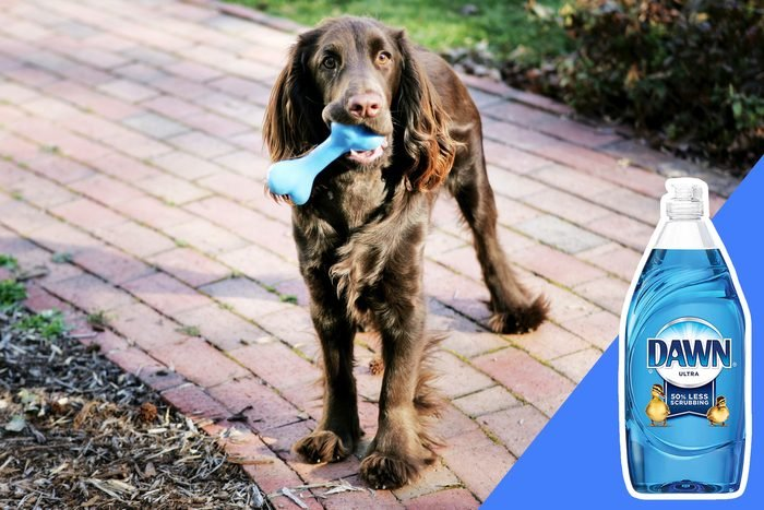 don't clean pet products with bleach
