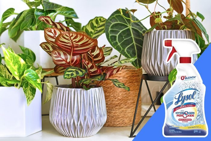 don't clean anything near your plants with bleach