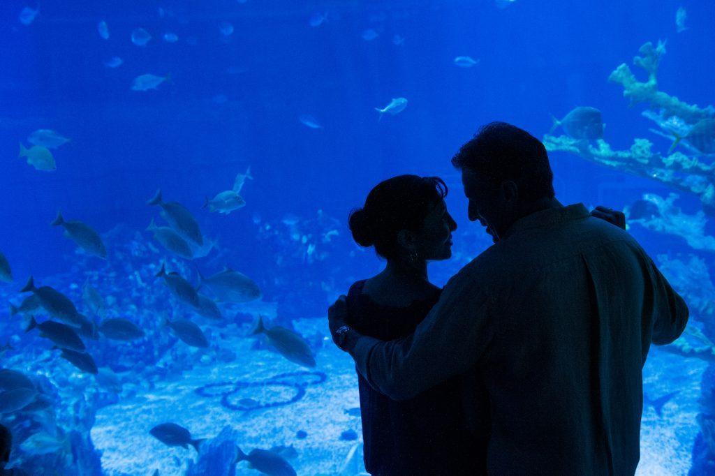 seas keep swimming