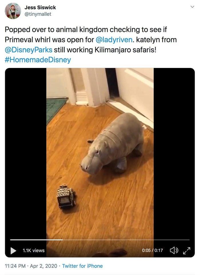 tinymallet home animal kingdom twitter video