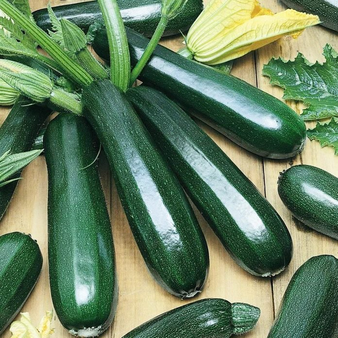 plant Zucchini