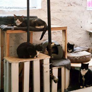 cat sanctuary in Denise Lauffer's basement