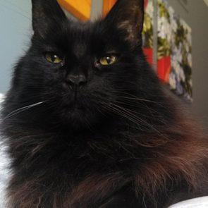 Melissa Wasilewski's cat, Aladdin