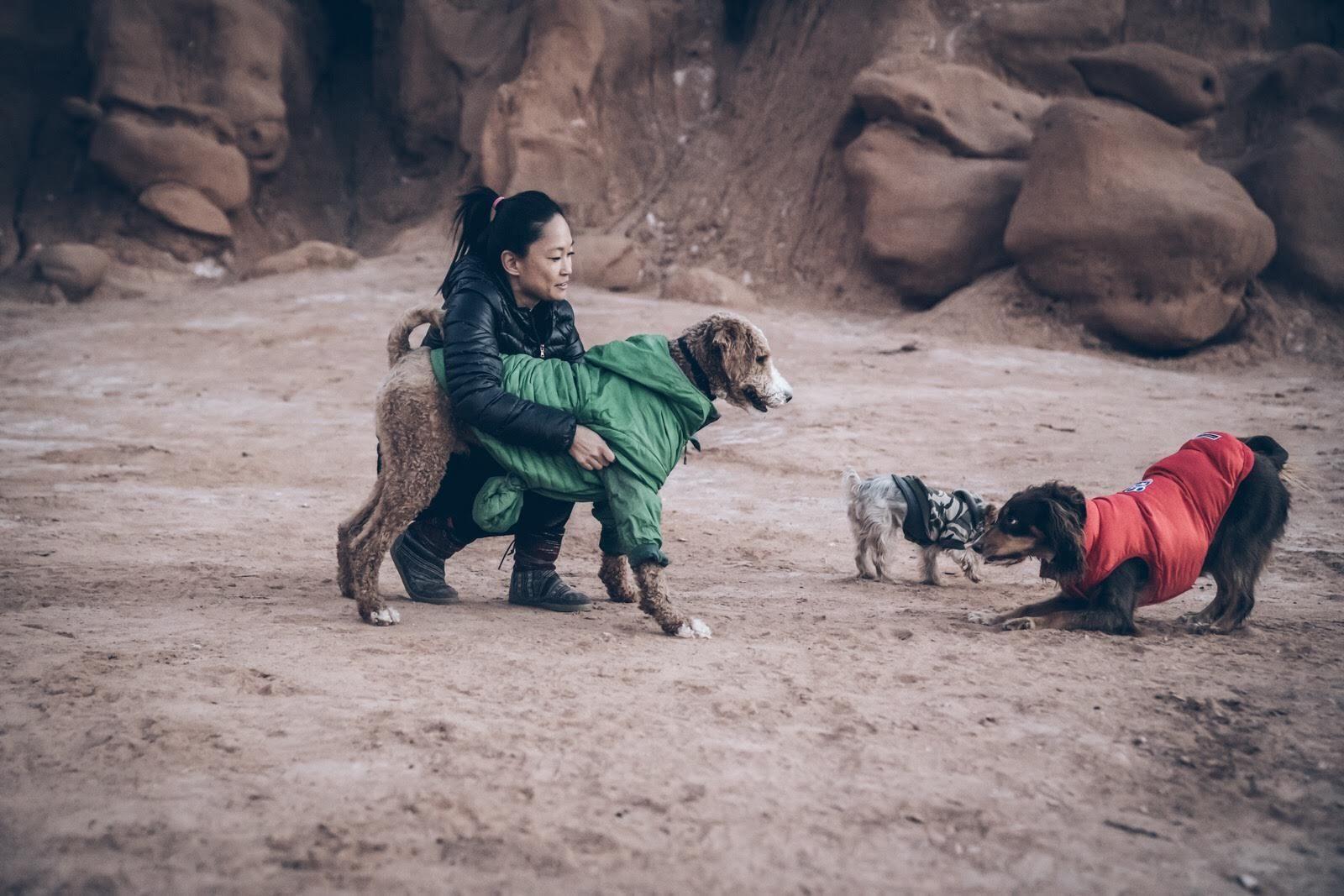 Jesse Stebbins dog road trip