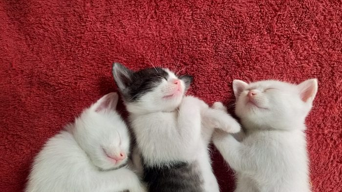 Directly Above Shot Of Kittens Sleeping On Red Rug At Home