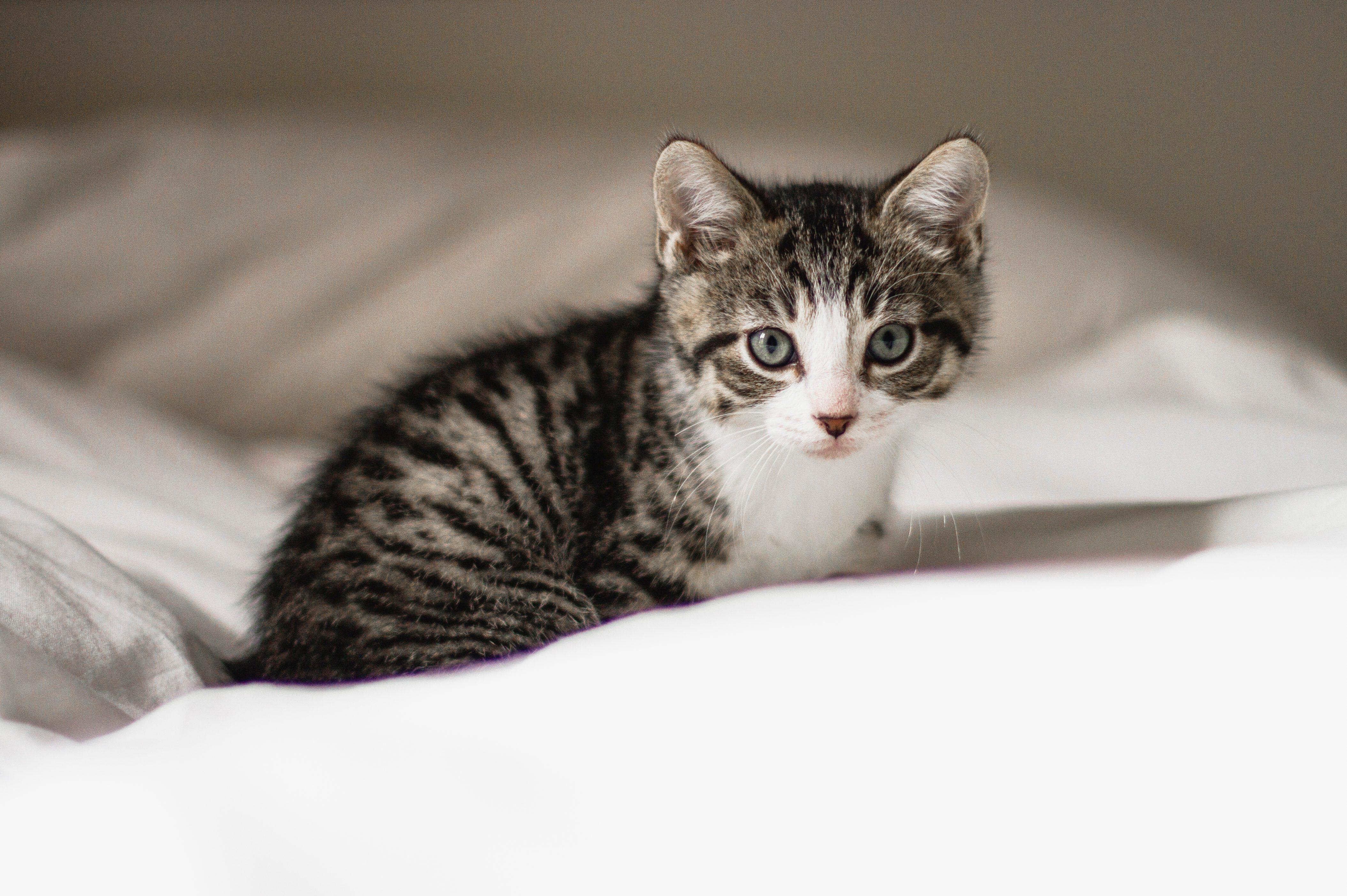 Cute kitten in a bed