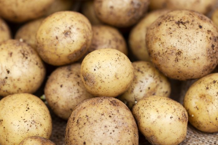 Harvested Young Fresh organic potatoes with soil