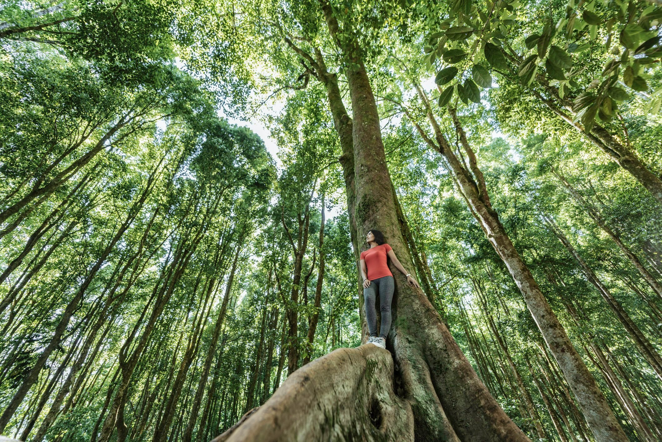 Young Asian woman standing on tropical in tropical rainforest setting