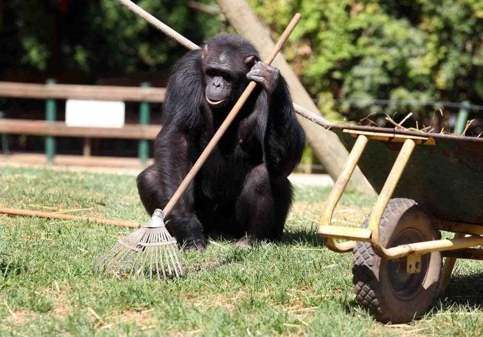 South African Monkey Gardeners