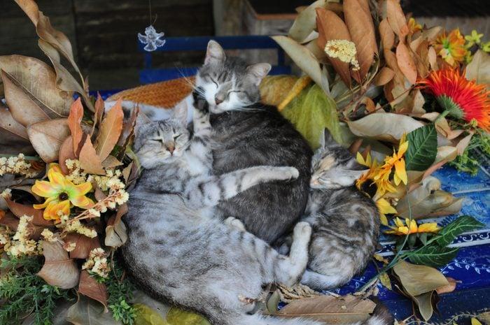 Cats sleeping on a mat among sunflowers