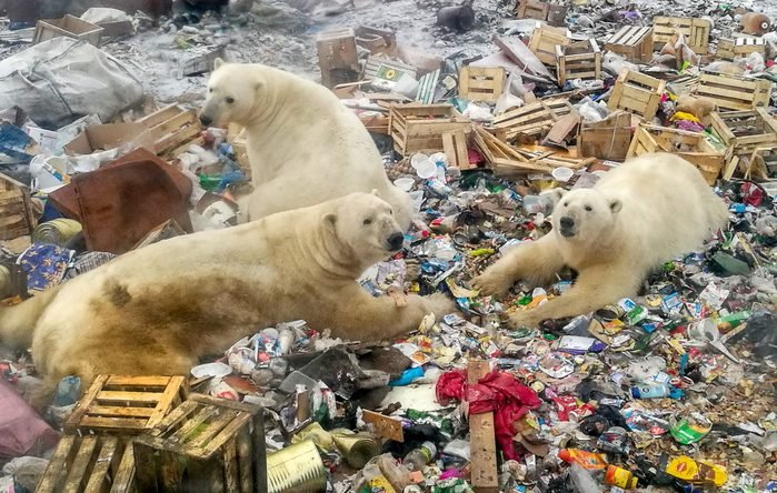 TOPSHOT-RUSSIA-ARCTIC-ENVIRONMENT-ANIMAL-CLIMATE