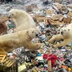 26 Powerful Photos That Show Why Oceans Still Need Our Help