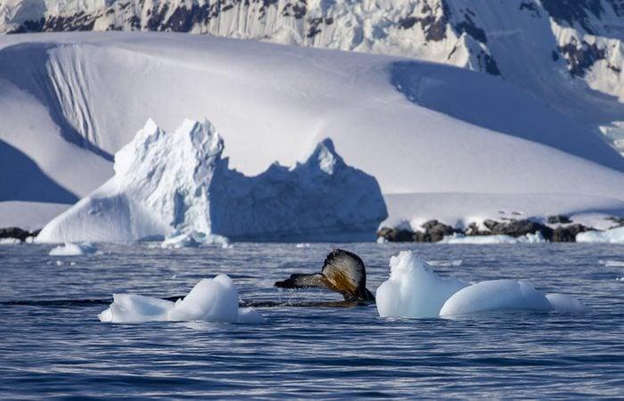 Antarctica: The White Continent