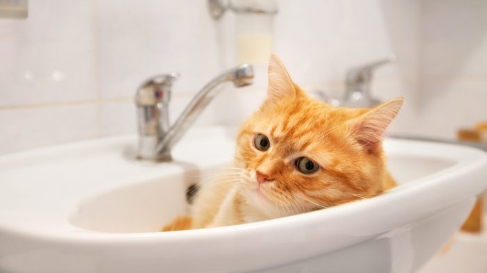 Red cat lying in the sink in the bathroom.