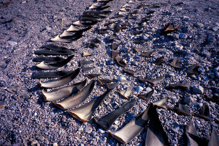 Shark finning camp