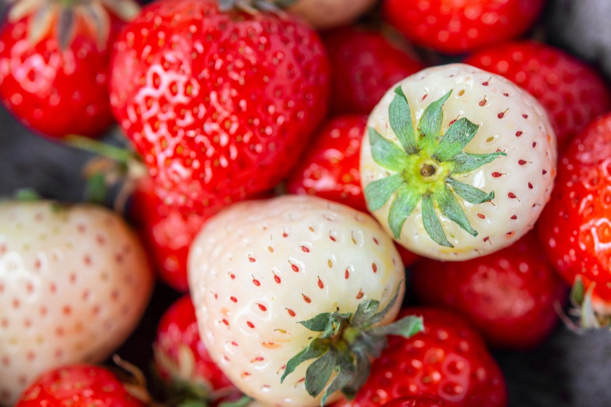 White strawberries Pineberry