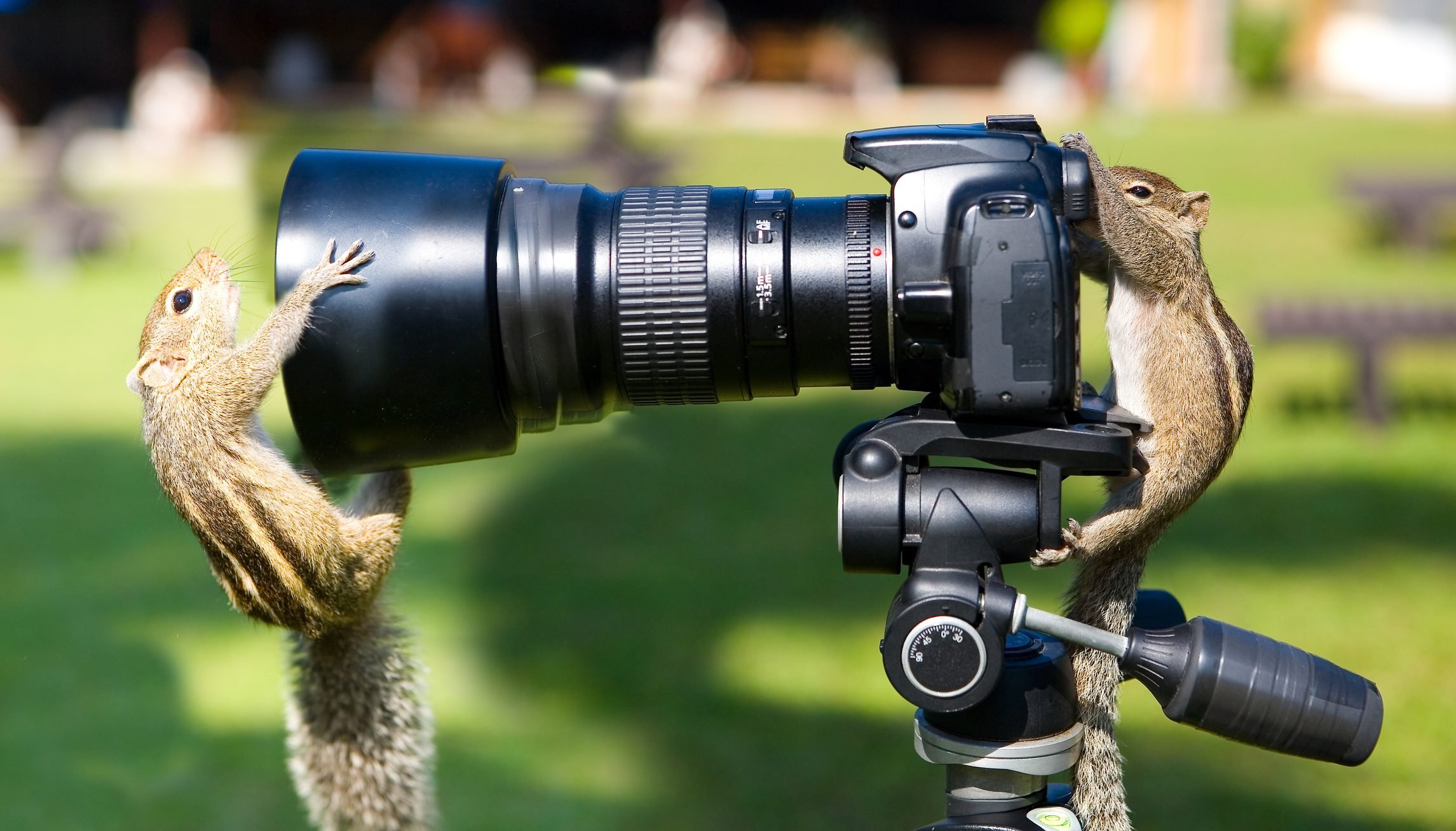 Palm squirrels staged a photo shoot.