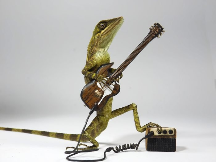 Close-Up Of Reptile With Toy Guitar Against White Background