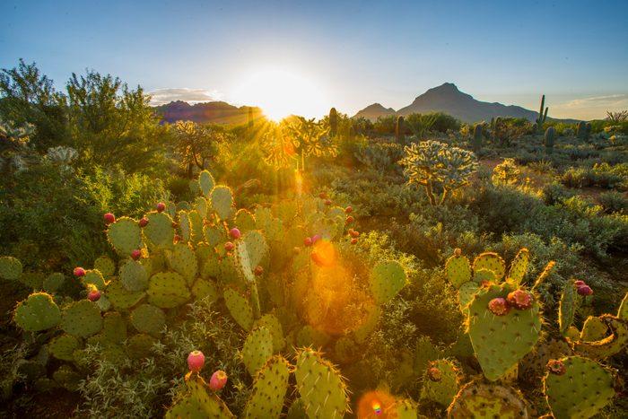 First Light In Cactus Garden