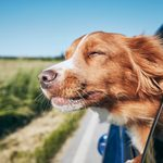 100+ Funny Dog Names That Exactly Capture Your New Pup