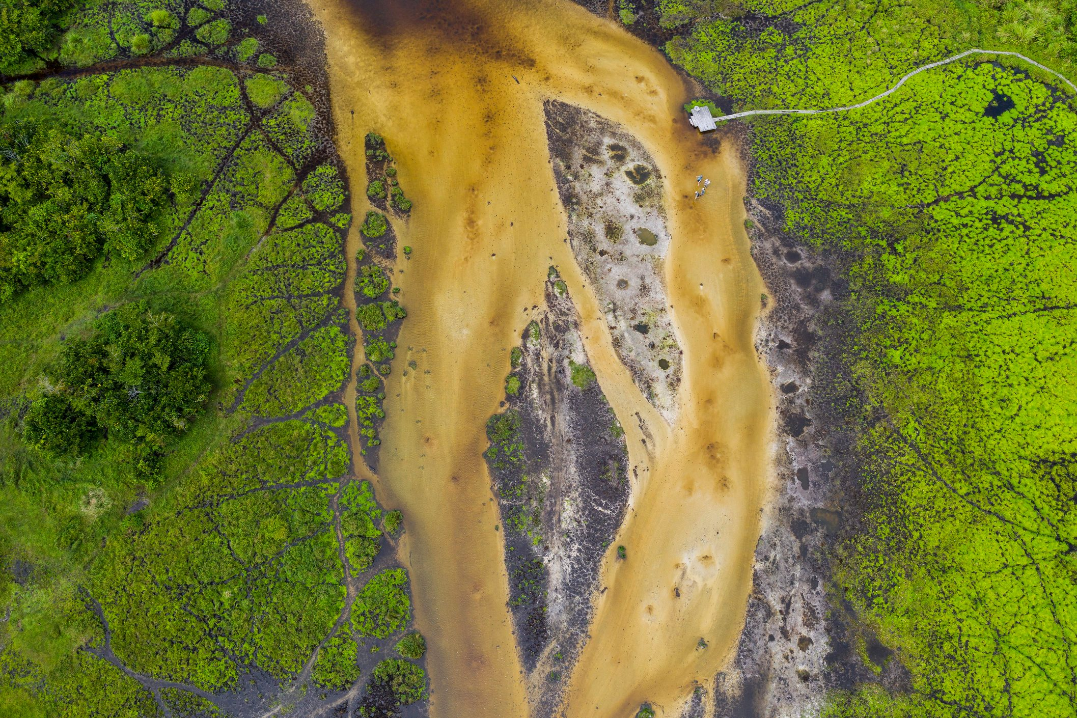 Aerial view of a bai (saline, mineral clearing) in the rainforest, Congo