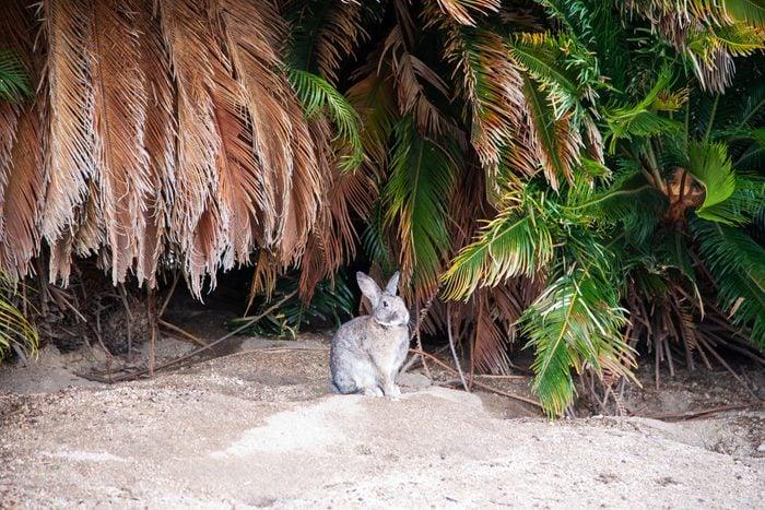 Cute little bunny outside