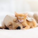18 Happy Stories of Puppies and Kittens Fostered During Coronavirus