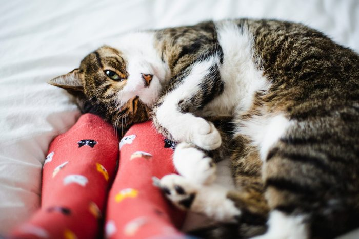 Cat on a bed and feet of a person