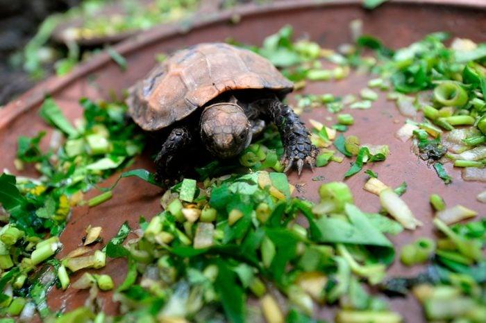BANGLADESH-CONSERVATION-ENVIRONMENT-ANIMAL-TORTOISE