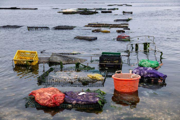 Fresh oyster harvest in Wellfleet...