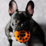 12 Indestructible Dog Toys Even the Toughest Fido Can't Break
