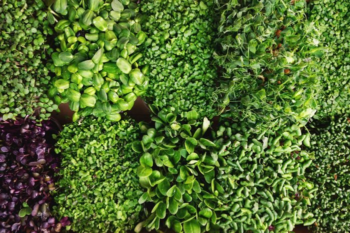 mix of fresh microgreens containers. top view