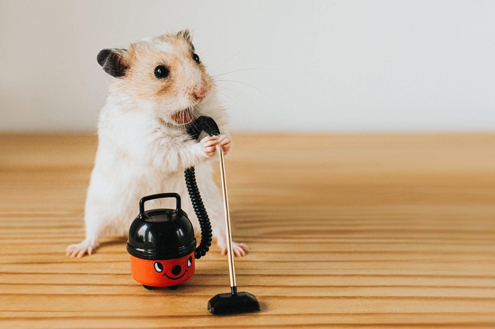 Hamster Vacuuming