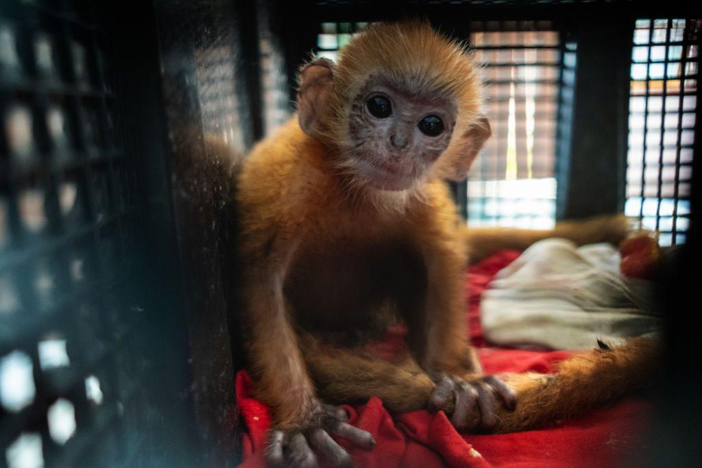Illegal Wildlife Trade In Indonesia