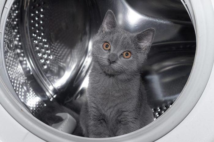 Cat in the washing machine . Washing machine. Pet. Drum machines . British kitten. Funny .