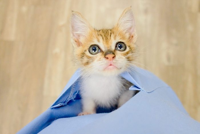 Small kitten in poket