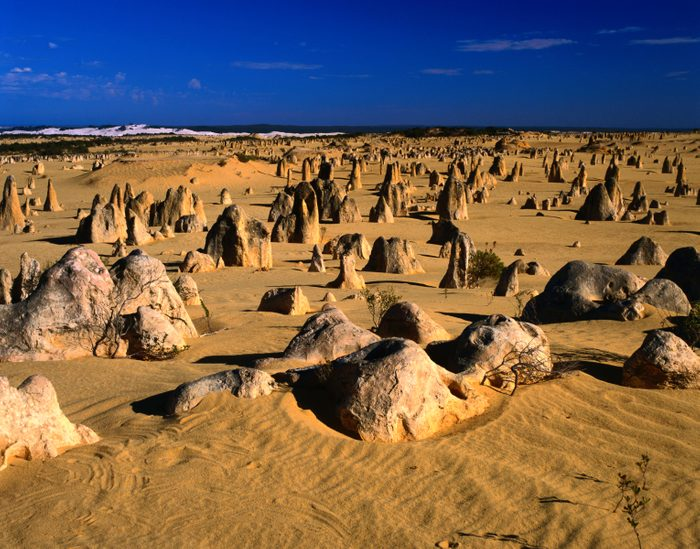The weird Pinnacles Desert landscape, the pinnacles are ancient limestone formations in the Nambung National Park