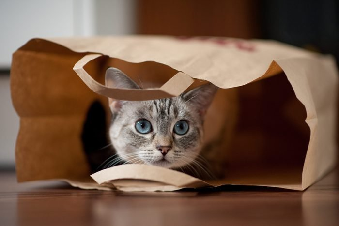 Cats and bags