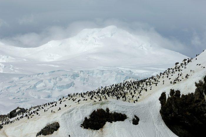 Antarctica, Elephant Island, Point Wild, Chinstrap Penguin...