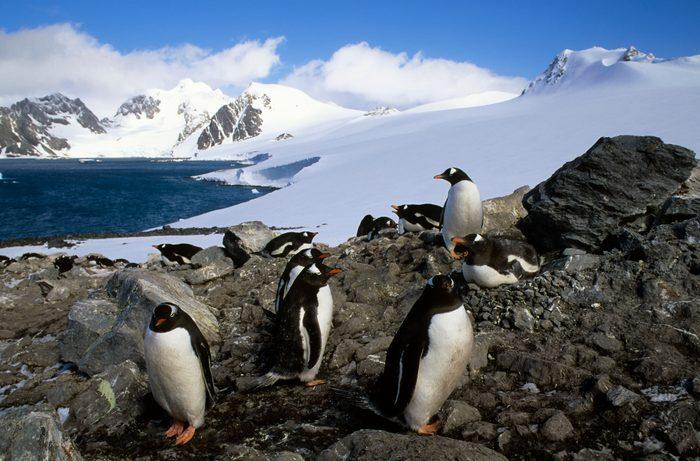 Antarctica, South Orkney Islands, Laurie Island, Gentoo...