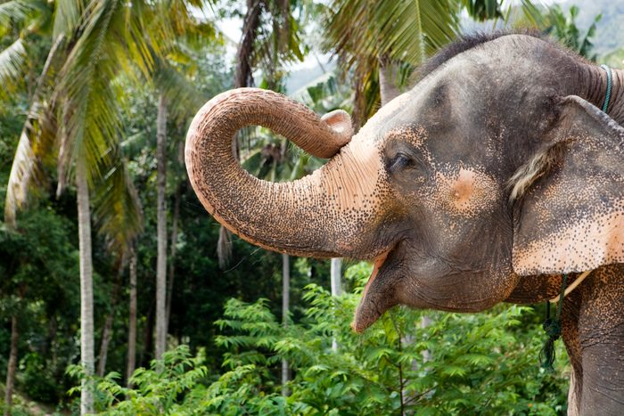 portrait of an elefant holding up his trunk