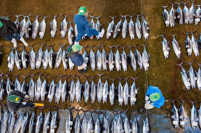 Katsuura Tuna Market