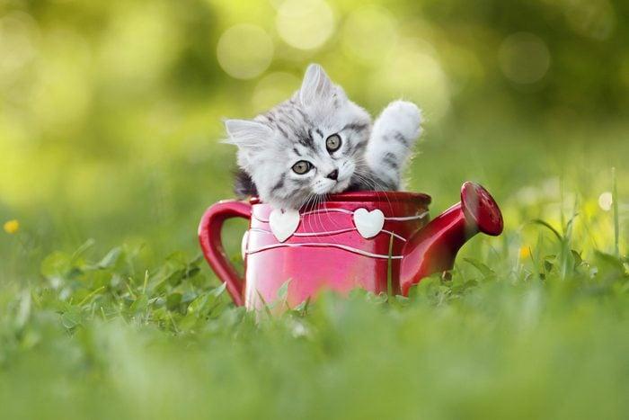 Baby cat looking into camera
