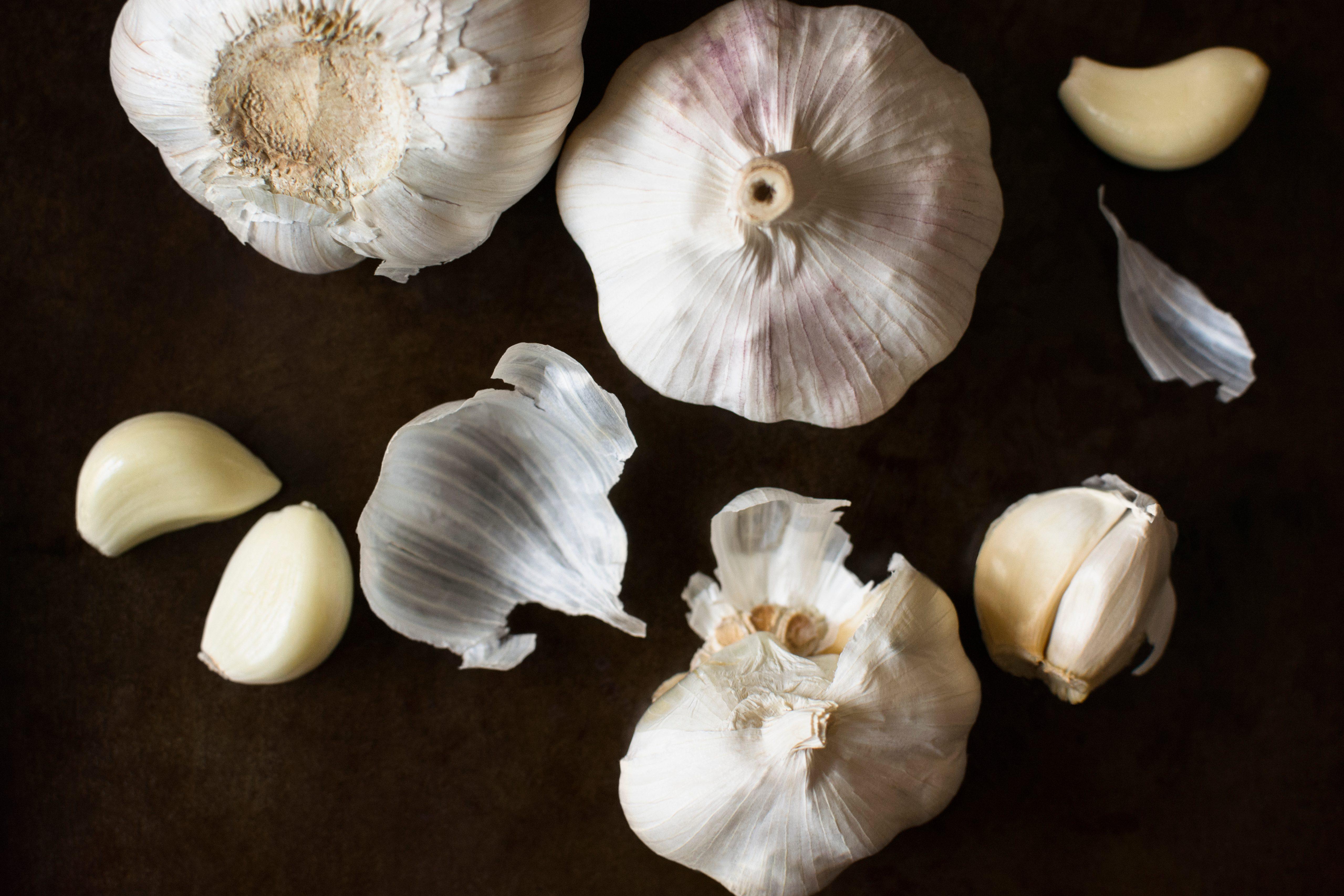 Studio shot of garlic