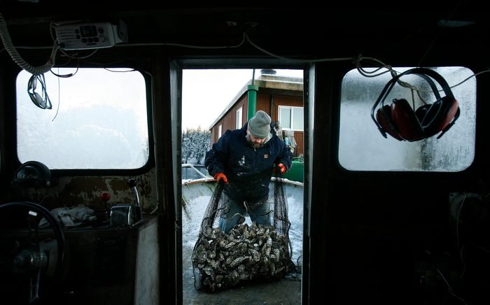 Cordova, Alaska: Jim Aguiar works with his oysters on his oyster farming operation in the pictures