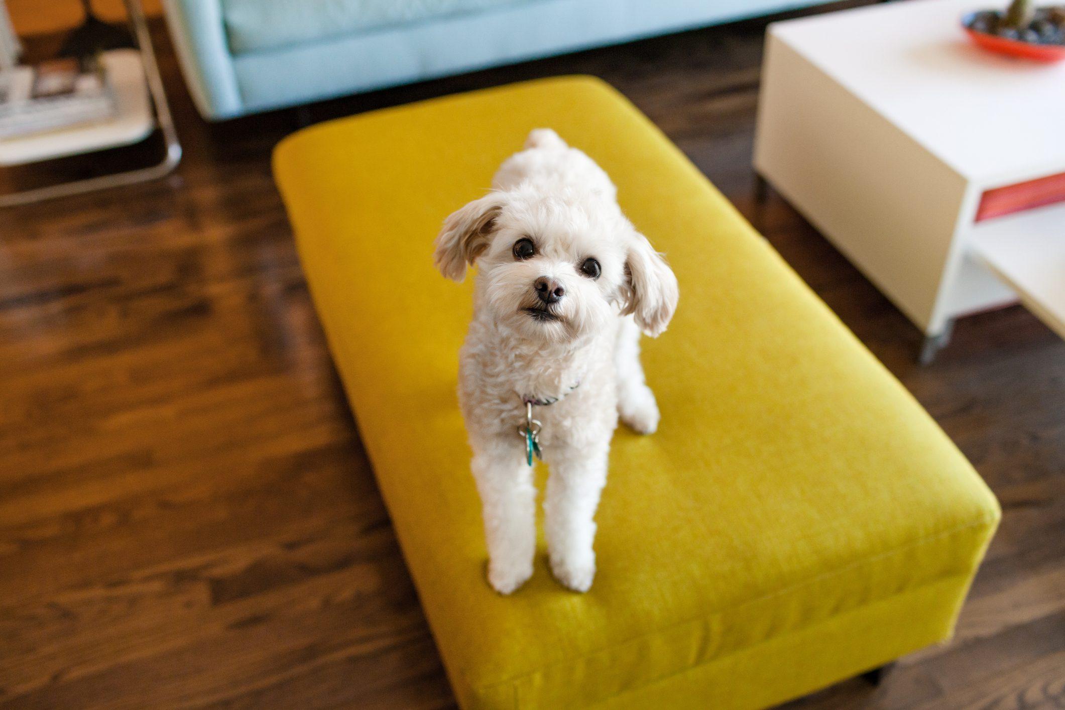 Portrait of dog sitting on stool