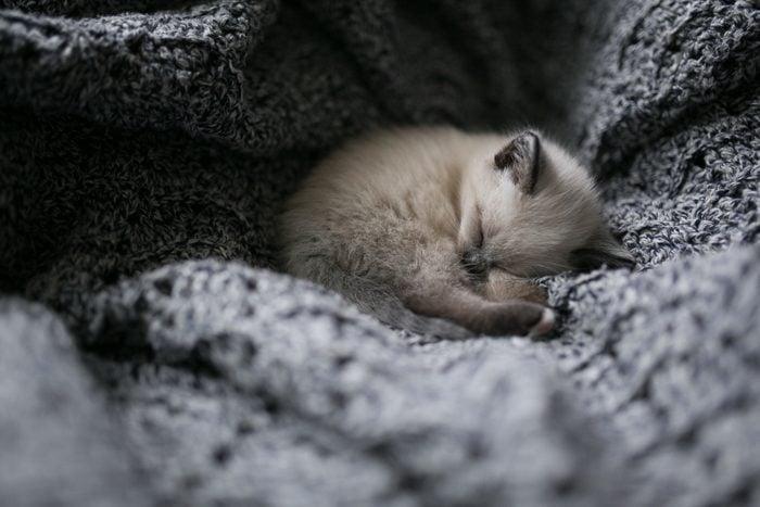 Kitten Snuggling in Knitted Blanket