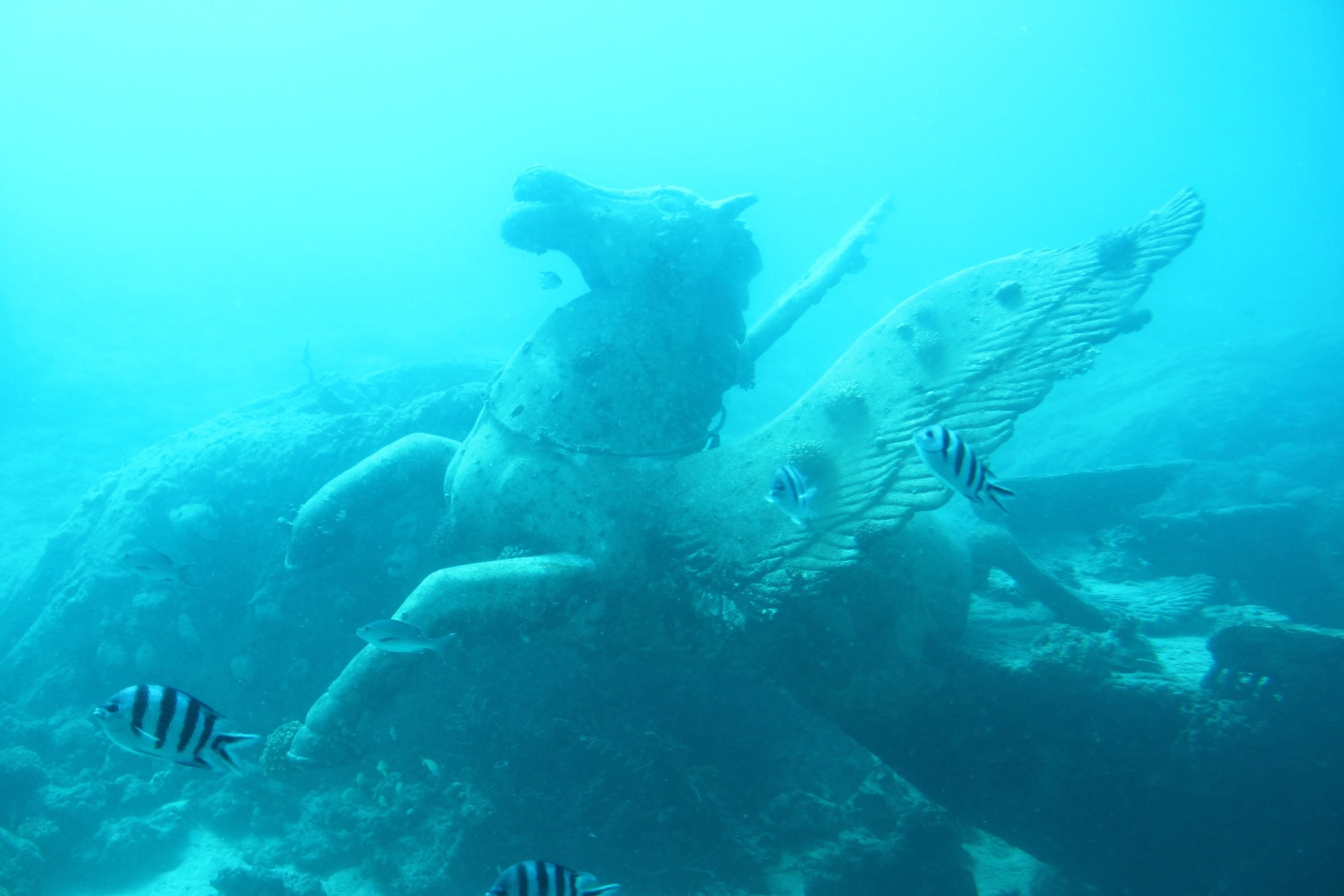 Fish Swimming By Statue In Sea