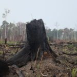 Why More People Need to Be Talking About How Palm Oil is Damaging the Environment